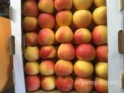 Объявление Яблоки оптом , первый сорт от КФХ  65+  32р/кг. в Краснодарском крае