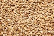 Объявление Пшеница класса фураж в Краснодарском крае