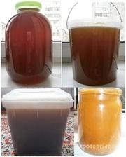 Объявление Алтайский мёд разнотравье с гречкой 10% натуральный вкусный 2017г своя пасека в Алтайском крае