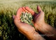Объявление Требуется главный агроном в Алтайском крае