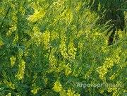Объявление Семена медоносных растений в Москве и Московской области
