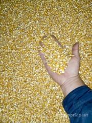 Объявление Кукуруза фуражная, урожай 2019 года в Краснодарском крае