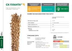 Объявление Семена сои: сорт СК ПЛАНТА селекции Компании Соевый комплекс в Краснодарском крае