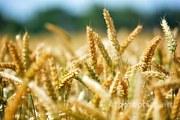 Объявление Современная агрохимия в Волгоградской области