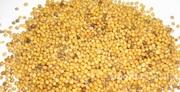 Объявление Семена  горчицы «Люкс» ЭС в Ростовской области