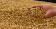 Объявление Пшеница 4 класса в Краснодарском крае
