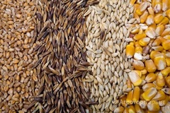 Объявление Продаем, пшеницу, овес, кукурузу, ячмень, семечку, горох. в Свердловской области