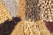 Объявление Семена кормовых, силосных и пастбищных трав в Москве и Московской области