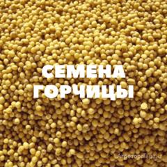 Объявление Семена озимой горчицы на посев в Краснодарском крае