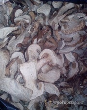 Объявление Белый гриб сухой в Алтайском крае