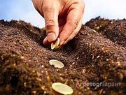 Объявление Ищу инвестора на посевную кампанию в Алтайском крае