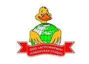 Объявление Цыпленок бройлерный суточный и подрощенный в Алтайском крае