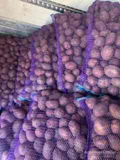 Объявление Картофель, капуста, лук, свекла, морковь в Нижегородской области