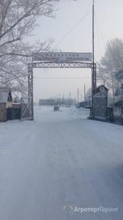 Объявление Продается действующее ХПП в с. Родино в Алтайском крае