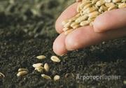 Объявление Семена зерновых, зернобобовых и фуражных культур в Новосибирской области