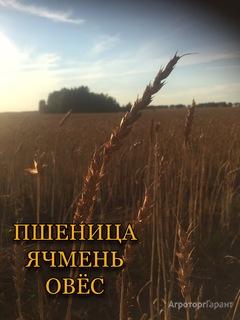 Объявление Пшеница в Курганской области