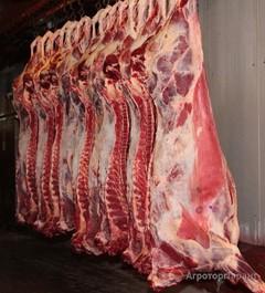 Объявление Мясо говядина в Пермском крае