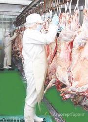 Объявление Закупаем и продаем мясо  Баранину. в Астраханской области