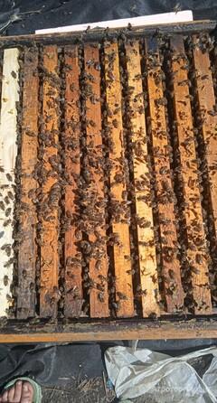 Объявление Продукты пчеловодства в Липецкой области