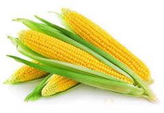 Объявление Семена кукурузы в Ростовской области