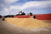 Объявление Продаем пшеницу (фураж) в Рязанской области