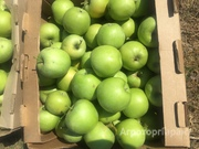 Объявление Яблоки оптом от производителя в Республике Крым