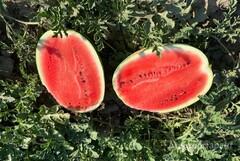 Объявление Семена арбуза Каристан в Краснодарском крае