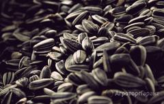 Объявление Закупаем подсолнечник масличный ГОСТ и кислотный в Калужской области