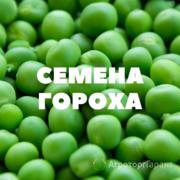 Объявление Семена гороха в Краснодарском крае