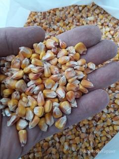 Объявление Кукуруза фуражная оптом в Ростовской области