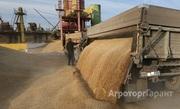 Объявление Пшеница 3 класс 1000 тонн, горох фуражный 60 тонн в Алтайском крае