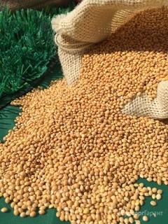 Объявление Просо на выращивание в Ростовской области
