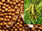 Объявление Продаем, покупаем, перерабатываем сою и различные виды маслосемян в Краснодарском крае