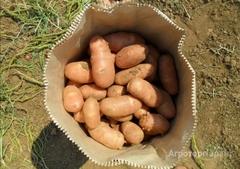 Объявление Картофель от производителя урожай 2020 в Астраханской области