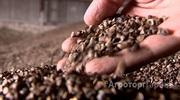 Объявление Гречиха с хозяйства 450 тонн в Алтайском крае