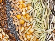 Объявление Семена зерновых и зернобобовых в Москве и Московской области