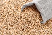 Объявление Пшеница 5 класса в Республике Крым