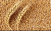 Объявление Закупаем пшеницу 3- 4 класса в Краснодарском крае