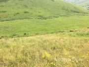 Объявление Земельный участок сельхоз земли общей площадью 226 Га в Алтайском крае