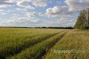 Объявление Продам право аренды 10 000га в Орловской области