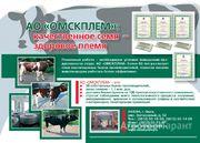 Объявление Семя высокоценных быков - производителей в Омской области