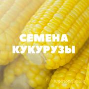 Объявление Семена кукурузы на посев в Краснодарском крае