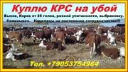 Объявление Куплю КРС на убой в Республике Калмыкия