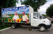 Объявление Семена подсолнечника Донской 22,Паритет в Воронежской области