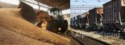 Объявление Пшеница 5 класса в Республике Адыгее