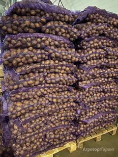 Объявление Предлагаем картофель оптом. в Белгородской области