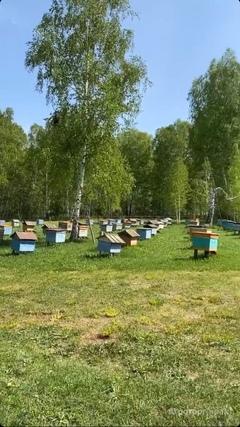Объявление Продам натуральный мёд 2020 года оптом с личной пасеки. в Алтайском крае