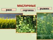 Объявление Семена масличных культур в Москве и Московской области