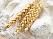 Объявление Мука пшеничная от производителя в Алтайском крае