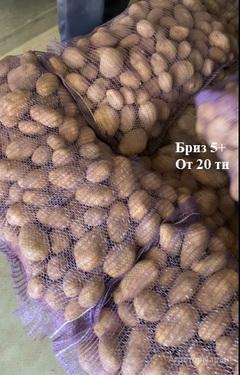 Объявление Товарный картофель, урожай 2020 г. из Нижегородской обл. в Нижегородской области